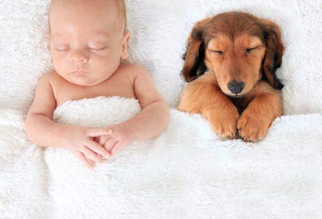 Puppies & Babbies