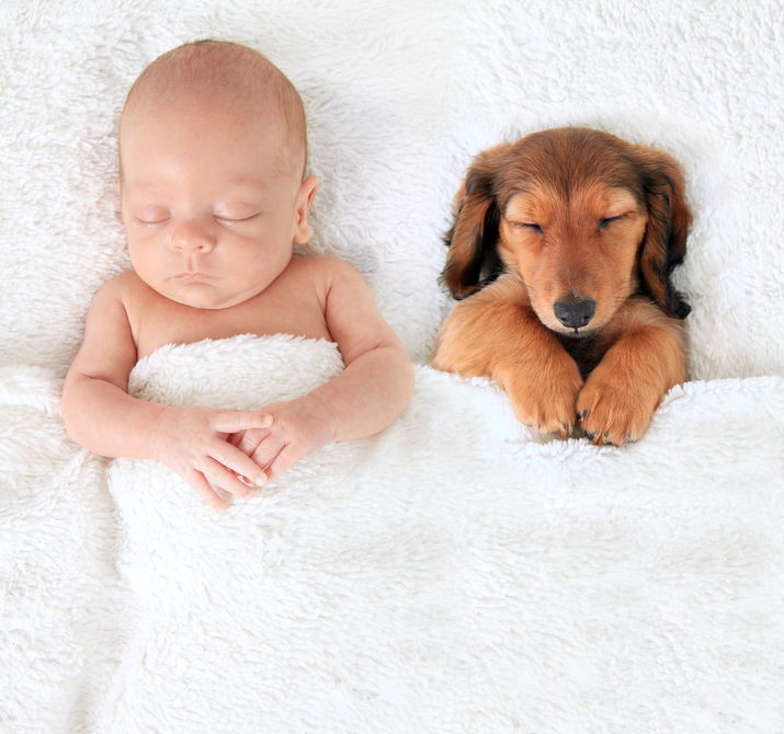 Puppies & Babbies